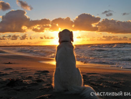 dog_on_the_beach